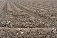Brown Soil Field Agricultural Ground. Plowed field or brown soil, agricultural background stock photos