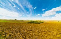 Brown soil under a blue sky in Tuscany. Italy Royalty Free Stock Photography