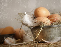 Brown speckled eggs  in old tin bowl Royalty Free Stock Photos