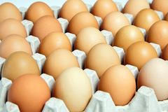 Chicken eggs in the cardboard egg tray royalty free stock photo