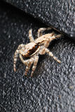 Brown Spider. A macro photo taken on a spider at a park Royalty Free Stock Photography