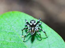 Brown spider Stock Photo