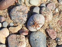 Brown spider on stone Royalty Free Stock Images