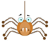 Brown spider Royalty Free Stock Photo
