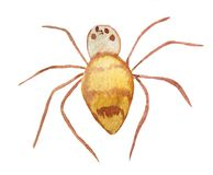 Brown spider on a white background. stock illustration