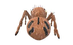 Brown spider on white seen from the back side Stock Photos
