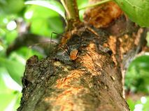 Brown Spider on a Wooden Tree Branch Royalty Free Stock Images