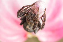 Brown  spiders Stock Photos