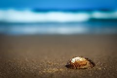 Spiked shell at the seashore royalty free stock photography