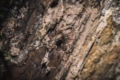 Brown-Spinne über einem Baumast stockbilder