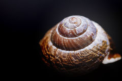 Brown spiral shell on black background macro closeup Stock Images
