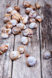 Brown spiral shells on old wooden surface. vertical decorative photo Stock Photos