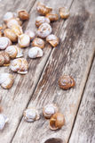 Brown spiral shells on old wooden surface. vertical decorative photo Stock Images