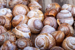 Brown spiral shells on a wooden board decorative photo Royalty Free Stock Images