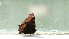 Brown spotted butterfly walking on the windowsill Royalty Free Stock Photo