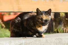 Brown spotted cat resting on the fence Stock Photography