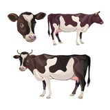 Cow set vector vector illustration