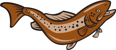Brown Spotted Trout Jumping Cartoon Royalty Free Stock Image