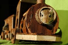 Brown Squirrel Inside of Brown Wooden Train Miniature Stock Photography