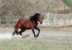 Brown stallion stock photography