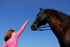 Brown stallion and little girl Stock Photography