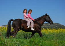 Brown stallion and twins 3 Royalty Free Stock Image