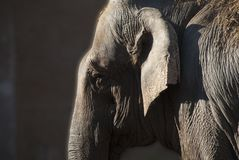 Elephant profile. Photographed from very close. stock image