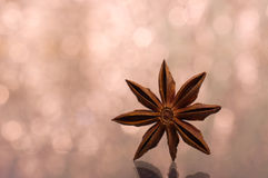 Brown star anise, east asian spice with bokeh background. Selective focus Royalty Free Stock Photos