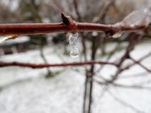 The brown stem under rain drops and snow Royalty Free Stock Photos