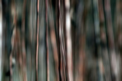 Brown stems. In abstract wood Stock Images