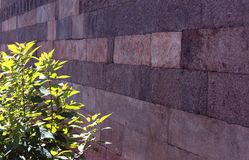 Brown stone block old wall with green leaves. Texture background photo Royalty Free Stock Photo