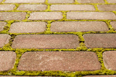 Brown stone block paving with moss Royalty Free Stock Photos