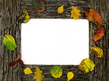 Brown stone frame with fallen leaves on a white Royalty Free Stock Images