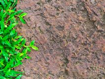 Brown stone walk way with green grass texture. royalty free stock photography