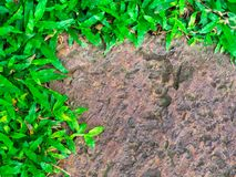 Brown stone walk way with green grass texture. stock images
