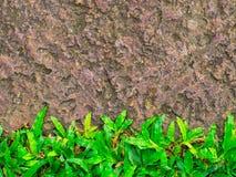 Brown stone walk way with green grass texture. stock photos
