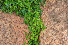 Brown stones with green grass texture Stock Images
