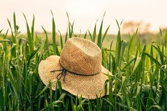 Brown Straw Hat on Green Rice Field during Daytime Royalty Free Stock Photography