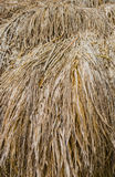 Brown straw heap. Close up Texture Background of brown straw heap Stock Photos