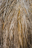 Brown straw heap. Close up Texture Background of brown straw heap Royalty Free Stock Photography