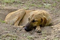 A stray dog sleeping calmly in a ditch