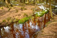 Brown stream in the forest, bog. Poland, Brown stream in the forest, bog europe peat near zieleniec river riverbed moss needles trees snow roots water nature royalty free stock photography