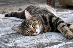 Brown streifte die Katze, die auf dem Boden schläft stockfoto