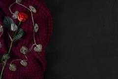 Brown strickte Plaid und Rotrose auf schwarzem Hintergrund Obenliegendes v Lizenzfreies Stockfoto