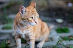 Brown striped cat with awareness. Brown striped cat becomes awared Royalty Free Stock Image