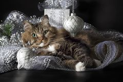 Cat Laying in Silver Christmas Ornaments. A brown striped cat with green eyes and white paws laying in silver and white Christmas ornaments and ribbon stock photo