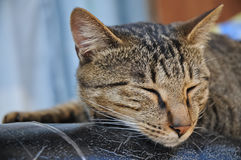 Brown stripes cute lazy cat is sleeping in one fine day Royalty Free Stock Photo