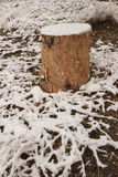 Brown stump powdered with spring snow Stock Photos