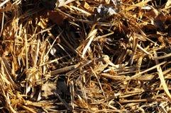 Brown Suchej trawy ziele tekstura Obrazy Stock