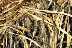Brown Suchej trawy ziele tekstura Fotografia Stock